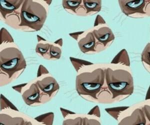 cat, wallpaper, and grumpy cat image