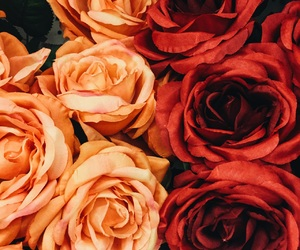 flowers, pattern, and roses image