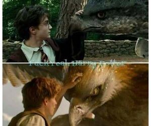 harry potter, fantastic beasts, and newt scamander image