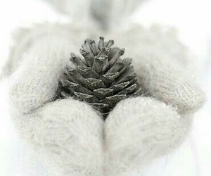 pine cone, snow, and winter image