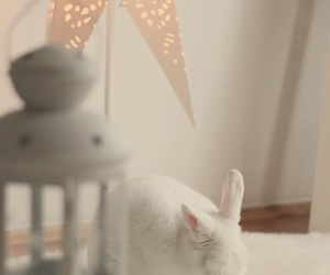 beautiful, bunny, and cleaning image