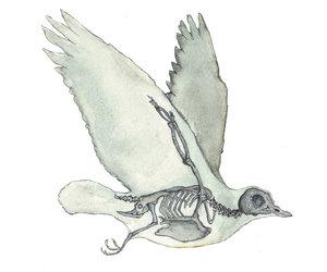 bird painting, bones, and dove image