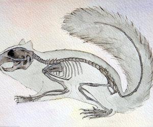 animal, bones, and etsy image