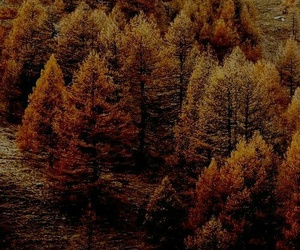 autumn, forest, and golden image