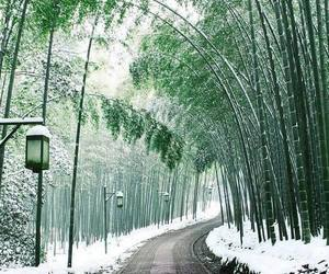 japan, snow, and nature image