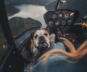 dog, animal, and helicopter image