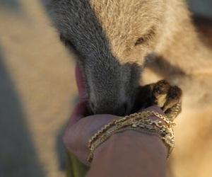 baby, tinylittleangel, and kangaroo image