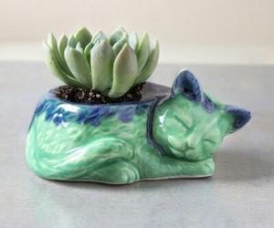 blue, cactus, and cat image