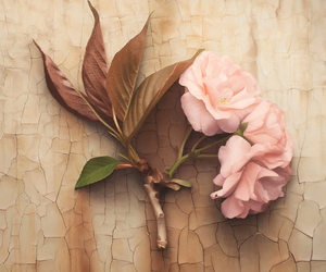 flowers, leaf, and pink image