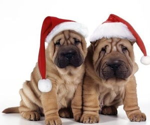 dogs, holiday, and christmas hats image