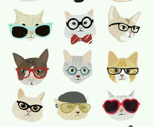 cat, wallpaper, and glasses image