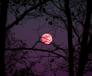 moon, night, and purple image