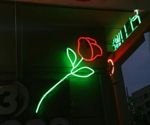 rose, flowers, and neon image