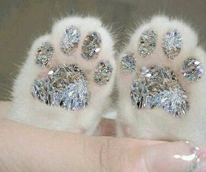 cat, diamond, and paws image