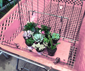 pink, plants, and flowers image
