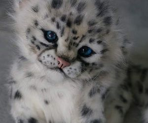 wallpaper, snow leopards, and cute image