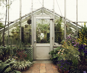 greenhouse and plants image