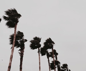 theme, palm trees, and grunge image