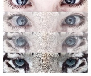 animal, blue, and edit image