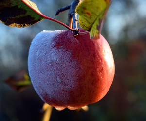 fruit, apple, and cold image