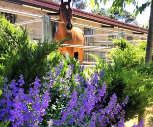 dressage, flowers, and horse image