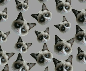 cat, kitty, and pattern image