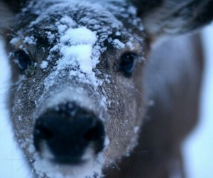 deer, snow, and animal image