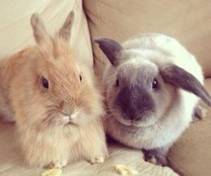 animals, bunnies, and rabbit image