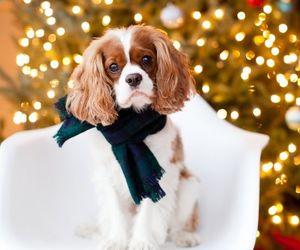 wallpaper, cockers, and dog christmas image