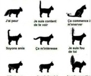chat and comprendre image