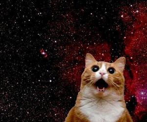 cat, funny, and galaxy image