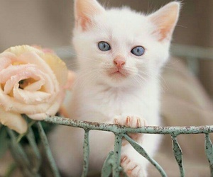 cat, adorable, and kittie image