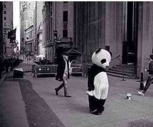 panda, alone, and sad image