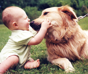 dog, baby, and love image