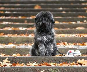 dog cute animal image