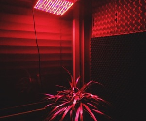 red, aesthetic, and light image