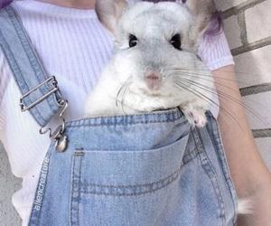 animal, grunge, and tumblr image