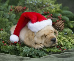 christmas hat, cute, and adorable image