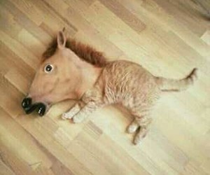 cat, horse, and funny image