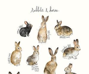 art, bunny, and rabbit image
