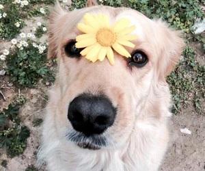 flower, puppy, and doggo image