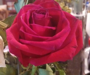 mothers day, pretty, and red image