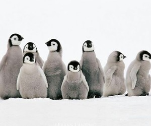 animals, nature, and penguin image
