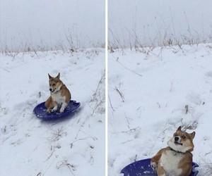animal, haha, and winter image