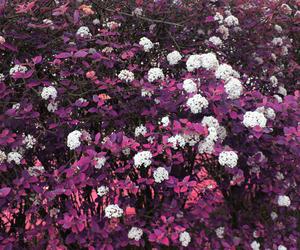 blanco, flower, and flor image