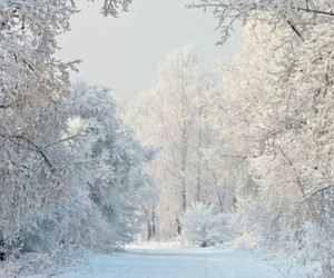 december, nature, and snow image