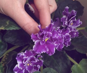 flower and african+violet image