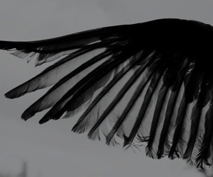 black, wings, and dark image