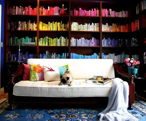 books, colors, and dog image