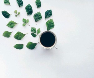 coffee, leafs, and plants image